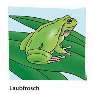 Laubfrosch - Motiv für Naturlehrpfad